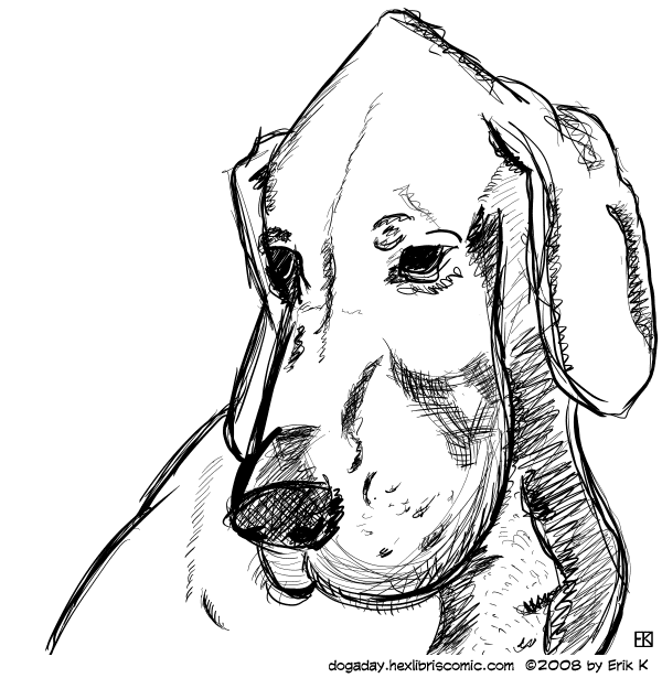 ink drawing of hound