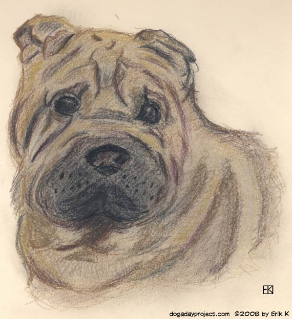 dog a day colored pencil shar pei