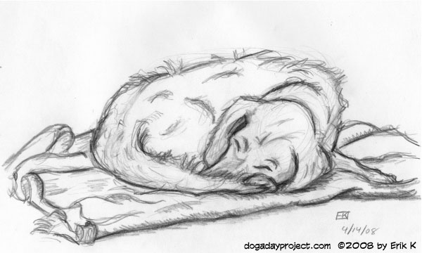 dog a day sketch of storm