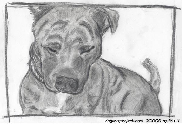 dog a day ginger image
