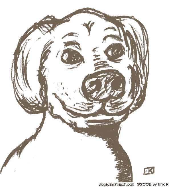 dog a day quick sketch image