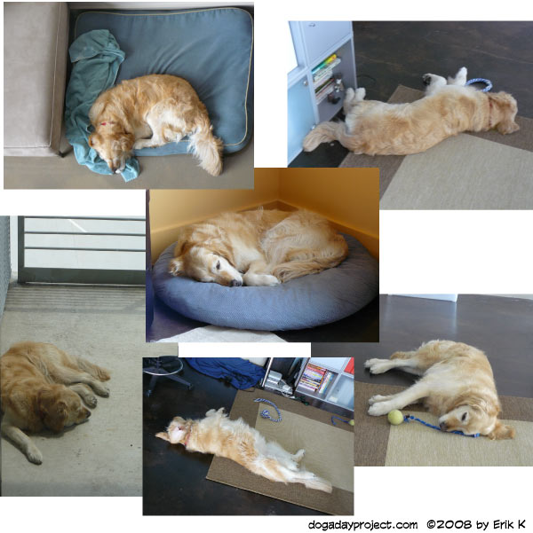 dog a day sleeping dogs image