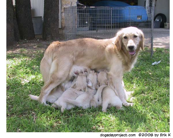 dog a day mother
