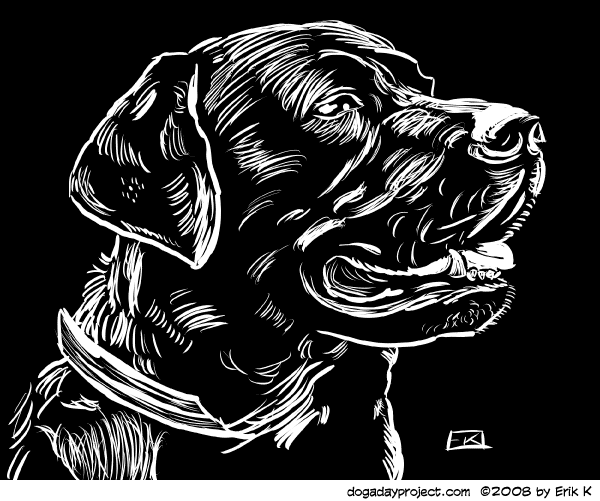 dog a day Scratchboard Lab image