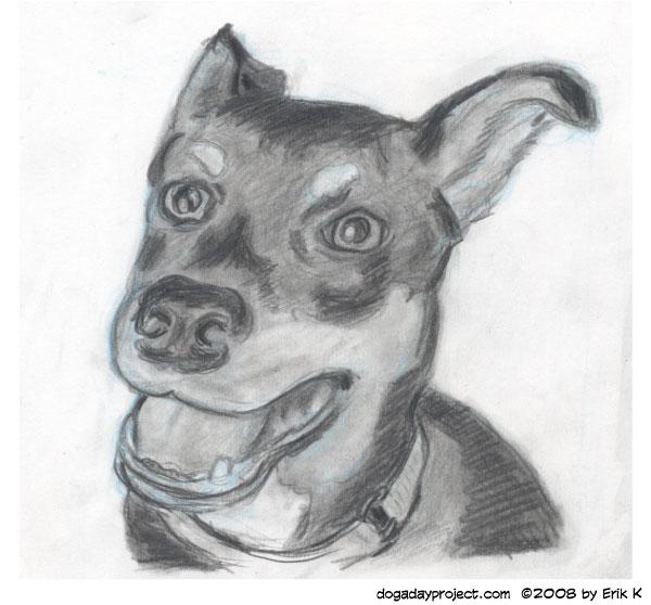 dog a day Adopt Wilson image