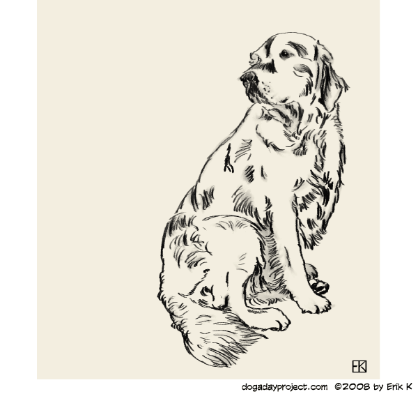 dog a day Storm in Digital Pencils image