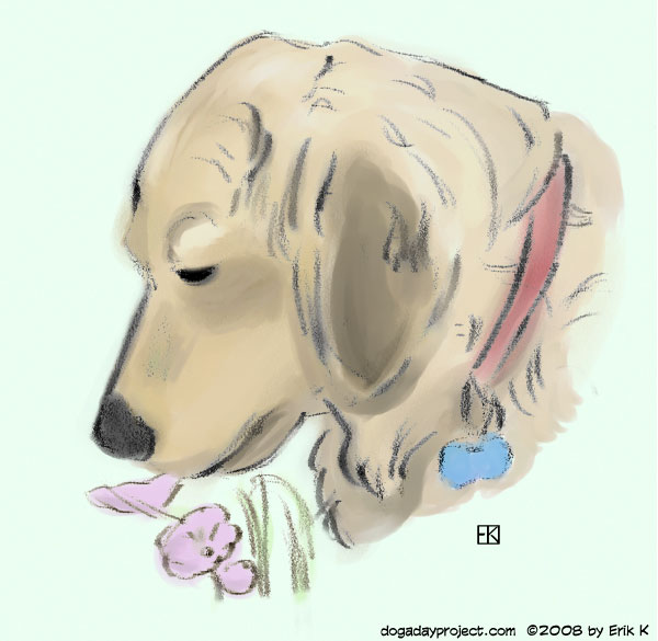 dog a day Sniffing the Flowers image