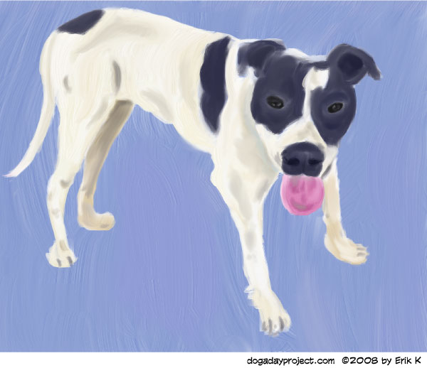 dog a day Adopt Dulcy image