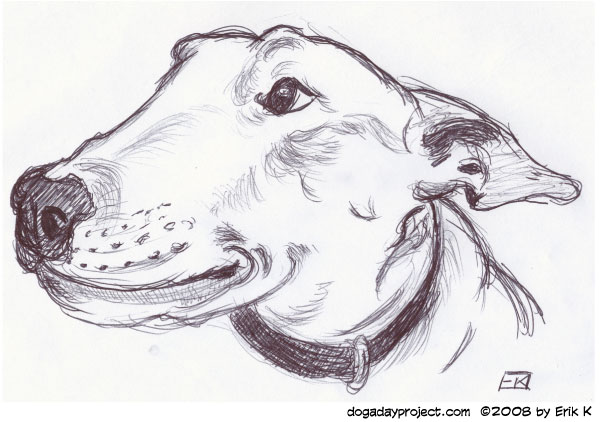 dog a day Bic Bull Terrier image