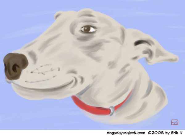 dog a day Bull Terrier image