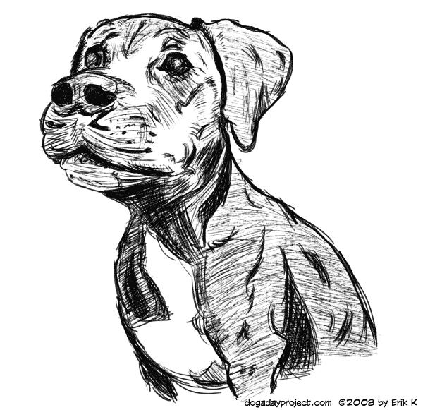 dog a day Adopt Boo image